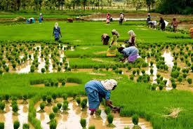 new crop insurance scheme